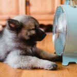 aria condizionata e cani