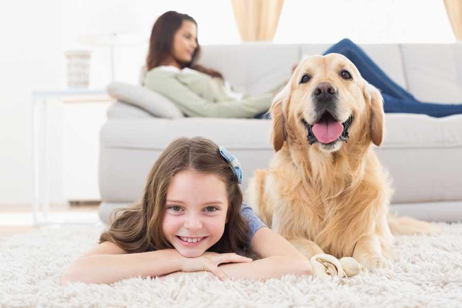 animali domestici e condizionatore d'aria